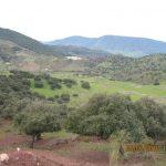 14 de ABRIL 2019 Ruta por las Alcaurias-Cerro Malaver (Montecorto)