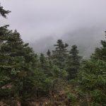 22 de ENERO 2017. Ruta senderista circular los Reales de Estepona