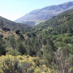 4 de JUNIO 2017. Ruta senderista por el fondo de valle de arroyo las Adelfas (Antequera)
