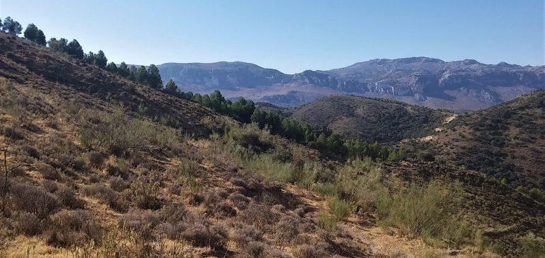 24 de Septiembre 2017. Ruta por la Cuesta el Romeral. Aula museo de geologia Málaga