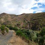 17 de FEBRERO  2019 Por los carriles de Fuensanta-Loma del Cagón (Ojén)