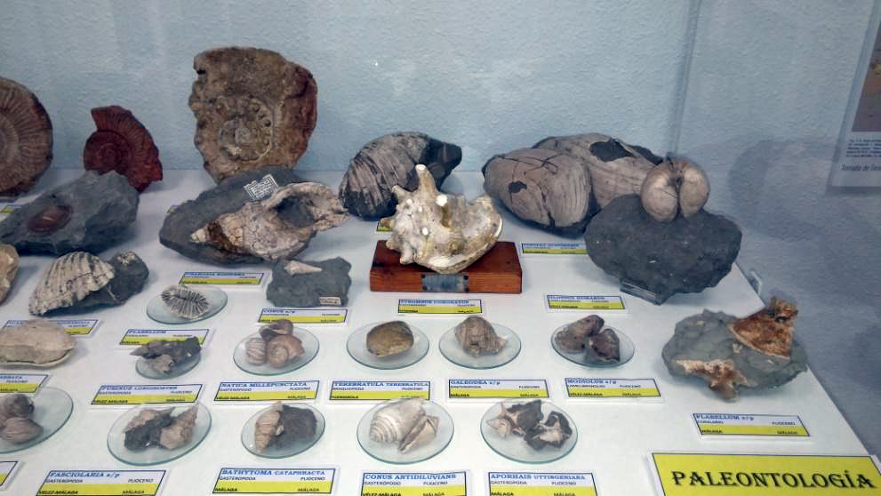 Colección-de-paleontología-Plioceno