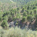 24 de JUNIO 2018. Distrito minero de Jarales-Cerro Minas  (Carratraca). Aula museo de geología