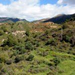 19 de ENERO 2020 Por las serpentinitas y gneises del Higuerón (Mijas-Fuengirola)