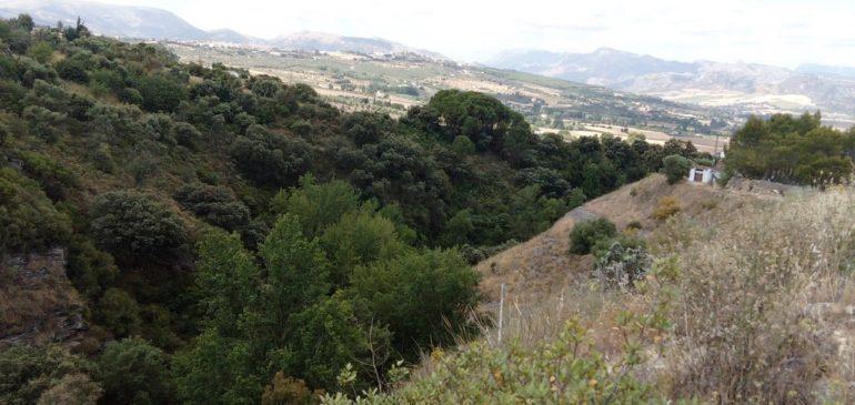 9 de Junio 2019. Por las rocas sedimentarias del Mioceno Tortoniense de Arriate. Aula museo de geología Málaga