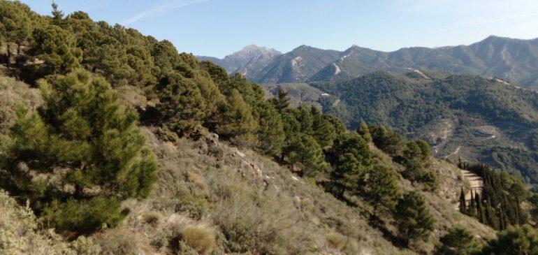 17 de Enero 2021 Por el metamorfismo alpino de Sierra Tejeda-Rio Salares (Salares). Aula museo de geología (Málaga)