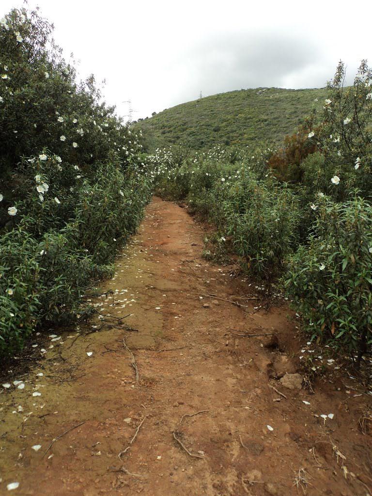 Mina Conchita. Gneises y leucogranitos descompuestos
