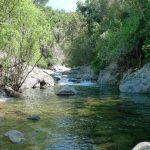 11 de JUNIO 2017. Bateo en río Verde de Istán