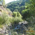 23 de JUNIO 2019  II Convocatoria Jornada de bateo aluvial en Río Genal